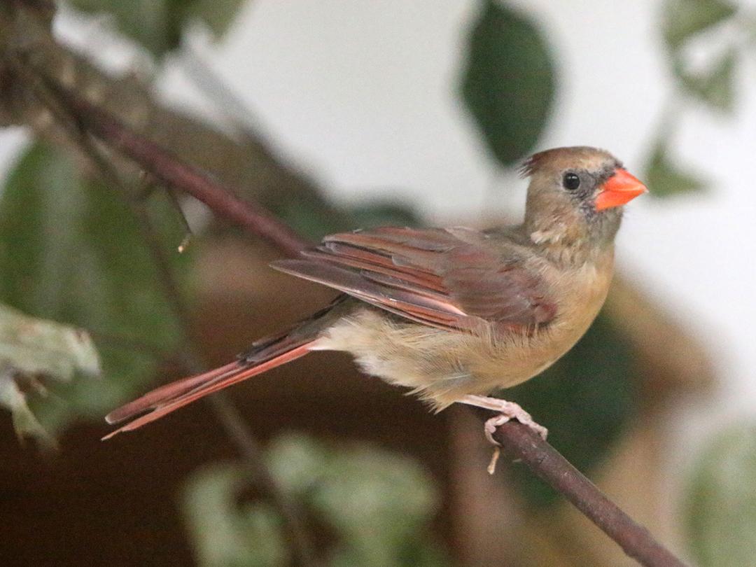Songbird Feeding