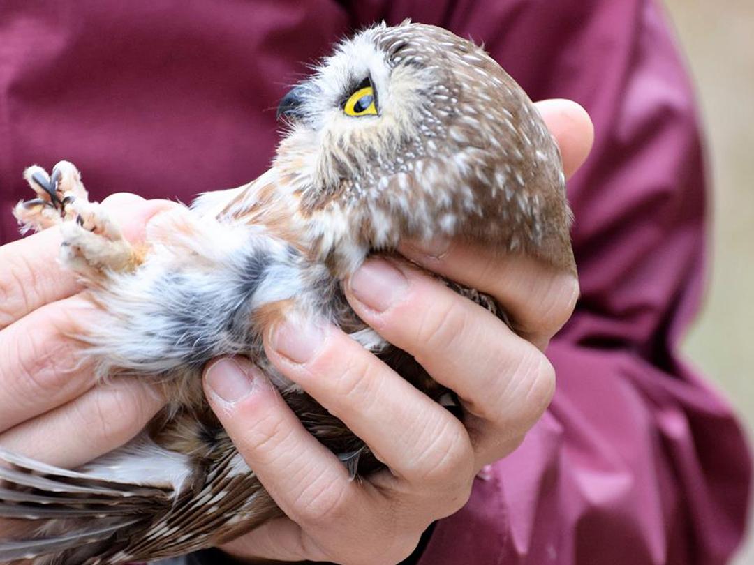Wild Bird Rehab
