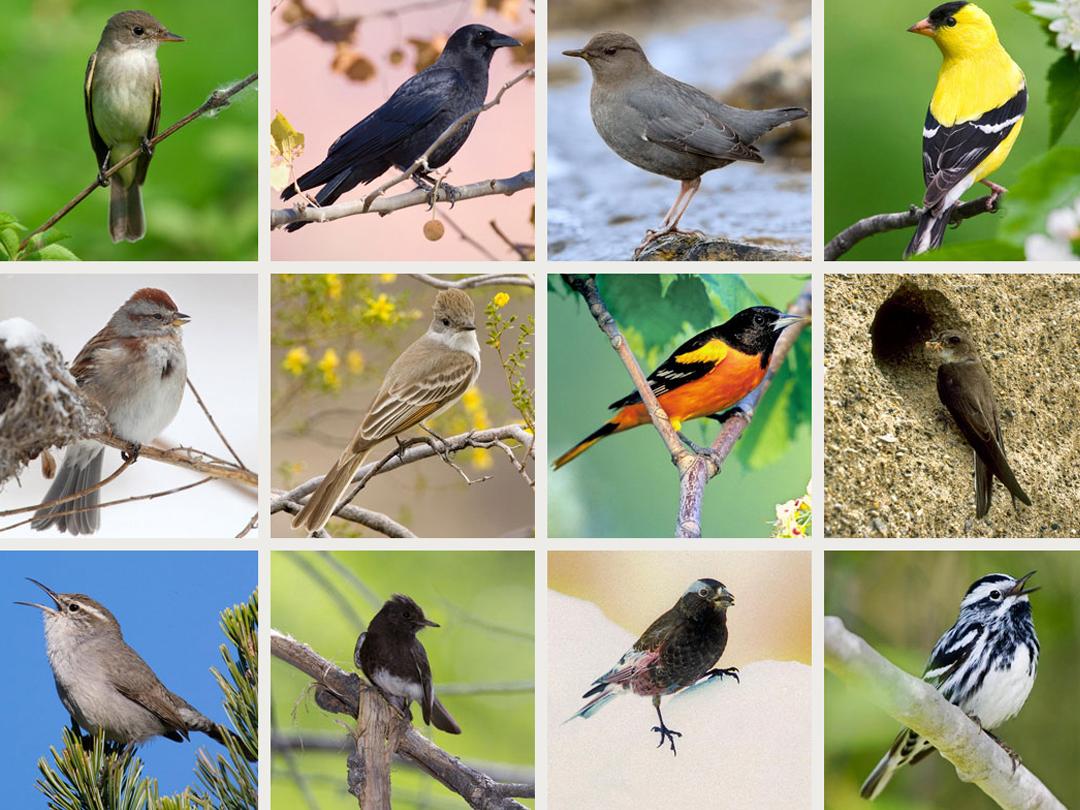 Songbird App