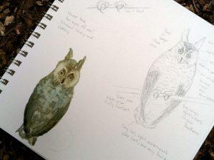 Bird Sketch Class