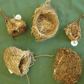 Bird Nests Kit