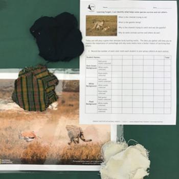 Moth Camouflage Kit