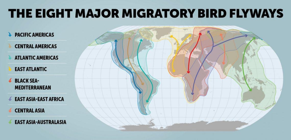 flyways_infographic_thin_1