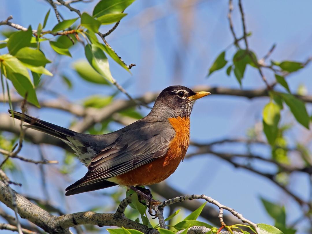 AtHome-Bird-1080x810-1