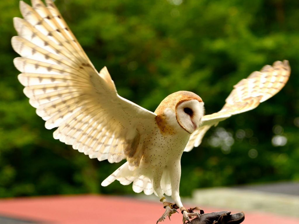 Owls & Legends