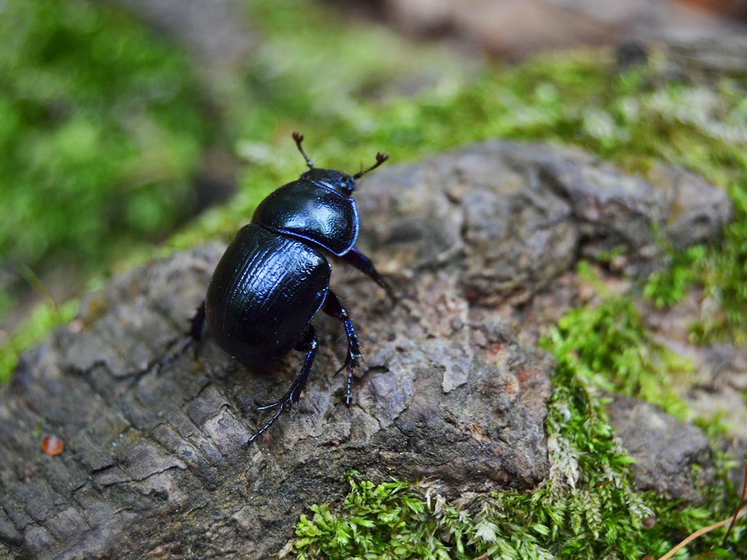 Bugs Virtual Talk
