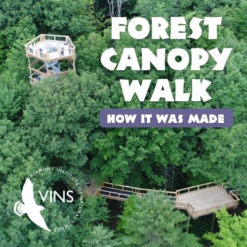 Forest Canopy Walk How It Was Made