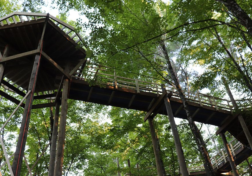 Forest Canopy Walk